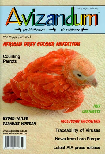 red african grey