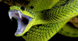 Green snake featured image