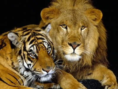 Beautiful pictures of animals from all over the world | Interior Design Ideas | AVSO.ORG