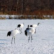 6-cranes-600