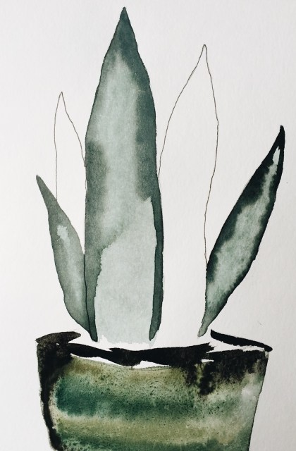 sansevieria in vintage pot