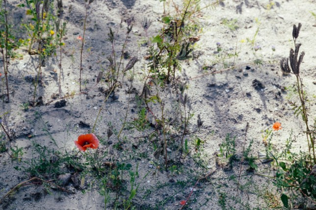 greens and poppies-9
