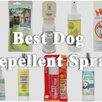 Best Dog Repellent Spray for Correcting Bad Behavior