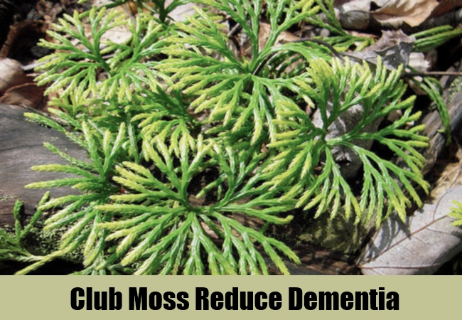 Club Moss Reduce Dementia