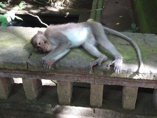 Monkey tired out from a tough day (Ubud, Indonesia, 2016).