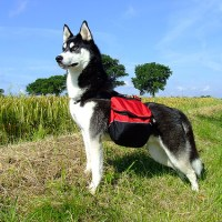 Popular Dog Backpacks