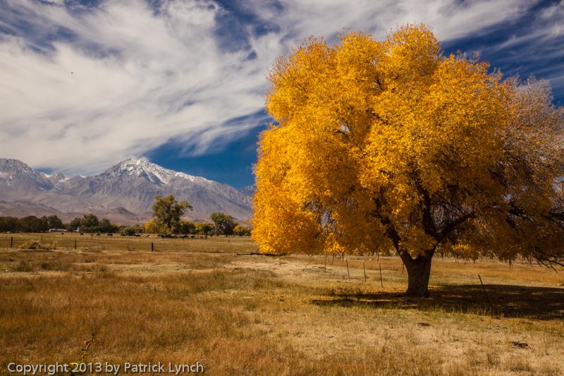 2013,Bishop,Eastern Sierra,Fall Colors,cottonwood