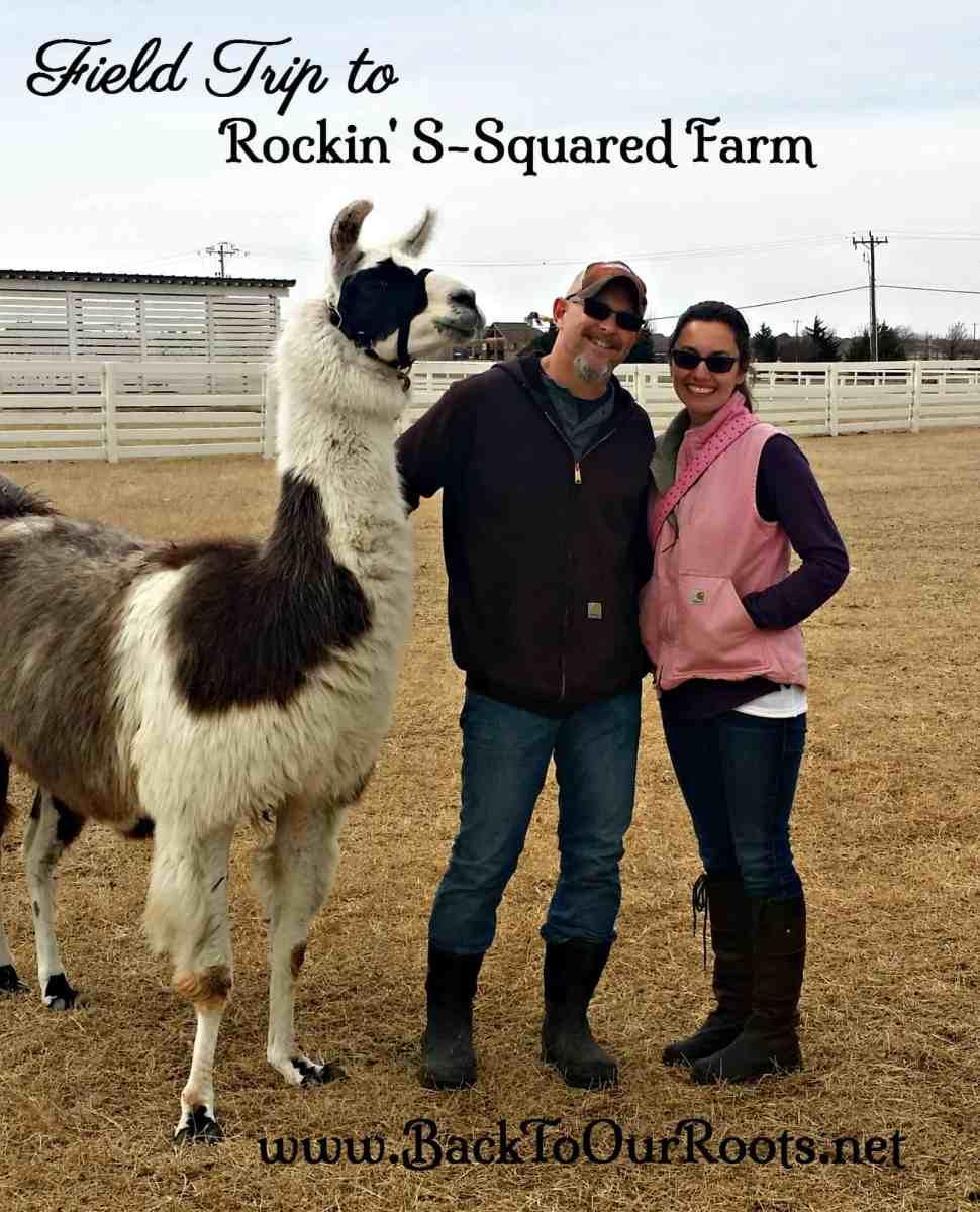 Field Trip to Rockin' S-Squared Farm