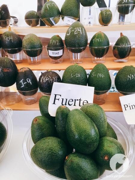 amy-shuster-avocado-festival-tastemade-8