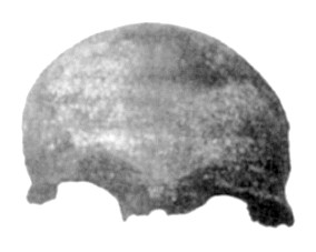 A photograph supposed to be of the Buenos Aires skull