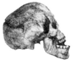 The 'Reck skull' ('Oldoway Man')