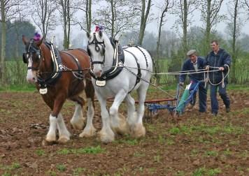 2012 DBailes Shire Horses