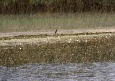 Rainy day in Hanningfield