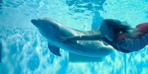 Winter il delfino 2