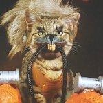 Keanu: il tenero gattino del film diventa protagonista di un calendario a tema cinematografico