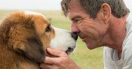 A Dog's Purpose: la vita vista attraverso gli occhi di un cane nel trailer del film di Lasse Hallström