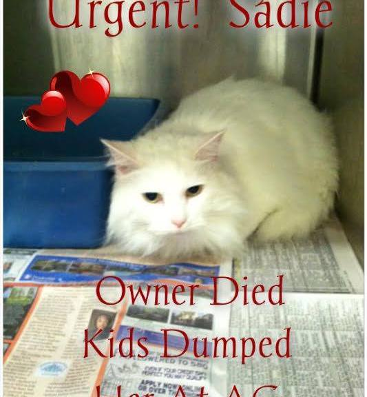 A Cat Rescue Saved Sadie From the Shelter