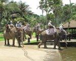 bali, elephant, sumatra, park, safari, taro, bali elephant, bali elephant safari, bali elephant safari park, elephant safari park, elephant ride, elephant safari ride, bathing pool, access