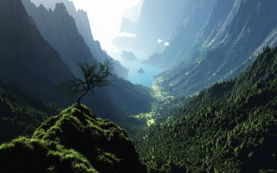 Forest From Above HD Background Wallpaper 25654 - Baltana