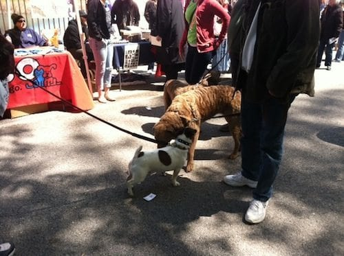 March for the Animals also serves as a fun mixer for friendly dogs and pet owners to sniff each other out.