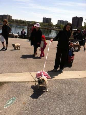 This pug wore a pink tutu -- her ebullient owner made the circuit with kids and canines in tow.