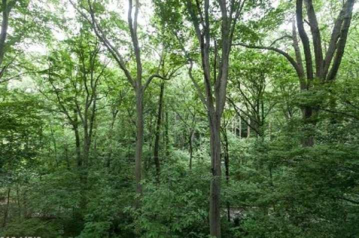 longwood:woods
