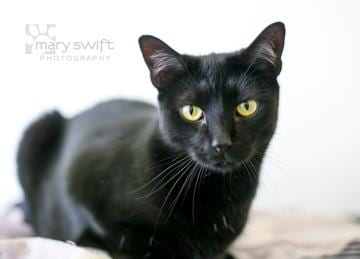 Baltimore Humane Society Pet of the Week