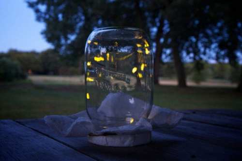Firelflies in a jar. Photo by Langston Creative via Flickr.