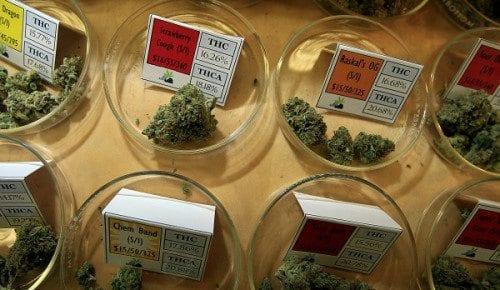 Medical marijuana programs may reduce painkiller overdose deaths