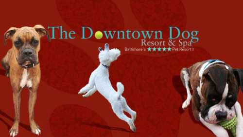 downtown dog resort and spa