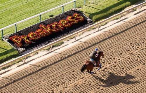 American Pharoah works out in prepartation for tomorrow's Preakness.  Photo via the Preakness Facebook page.