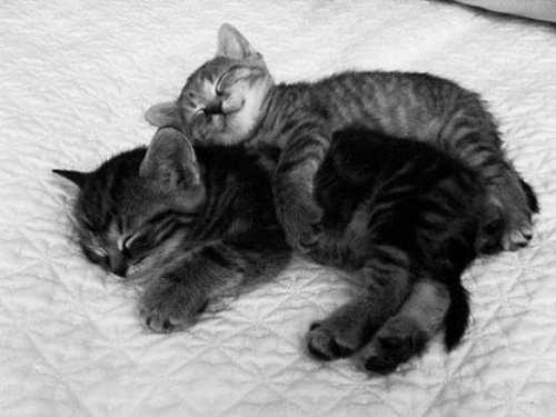 Cuddling-Kittens-024