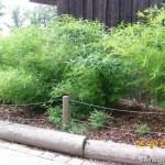 Bambusy w opolskim Zoo latem 2010
