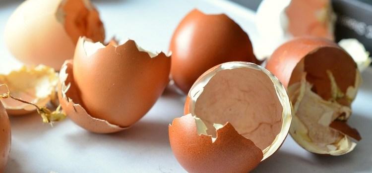 Nawóz do roślin doniczkowych ze skorupek jaj