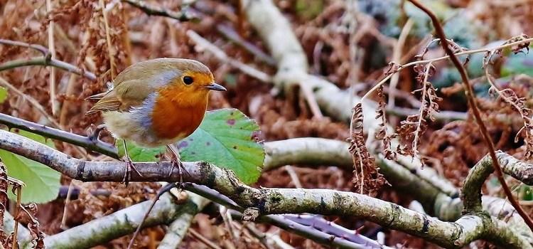 5 niezwykłych pomysłów na dokarmianie ptaków zimą