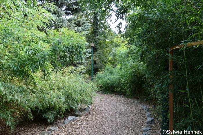 Bambusy mrozoodporne we wrocławskim Zoo