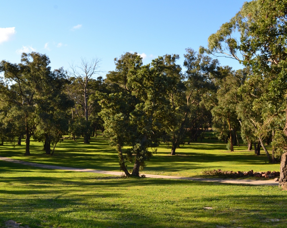 Banksia Park Puppies Grounds