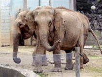 elephants brigitte bardot