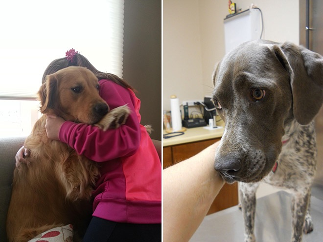 30-pets-going-to-vets