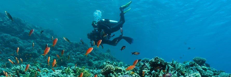 scuba-reef