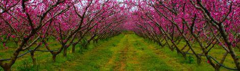 Profumi di primavera in Tuscia