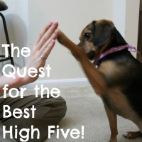 Q is for Quest for the Best High Five! #atozchallenge