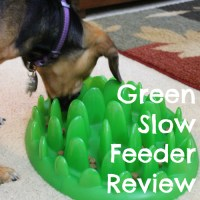 Slower Eating with the Green Feeder