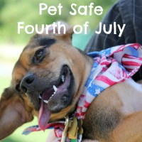 Tips for a Pet Safe Fourth of July