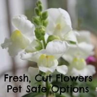Fresh, Cut Flowers - Pet Safe Options