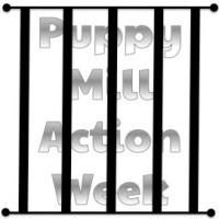 5 Red Flags of a Puppy Mill