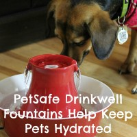 PetSafe Drinkwell Fountains Help Keep Pets Hydrated