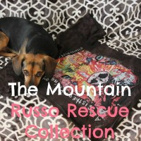 Building My Dog T-shirt Collection While Helping Shelter Pets #MountainArtwear + GIVEAWAY!