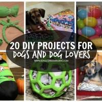 20 DIY Projects for Dogs and Dog Lovers