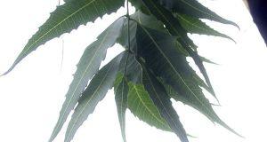 healing herbal elixir